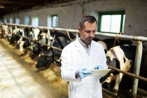 Resistenz gegen Antibiotika und die Viehzucht
