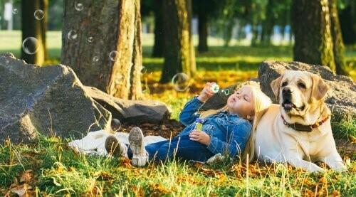 5 ruhige Hunderassen