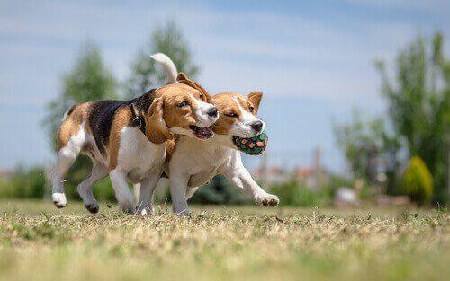 Warum Sozialisierung für Hunde so wichtig ist