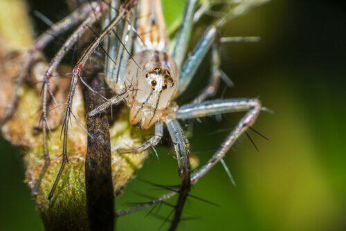 Spinnen mit einem Lächeln: Verhalten und Lebensraum