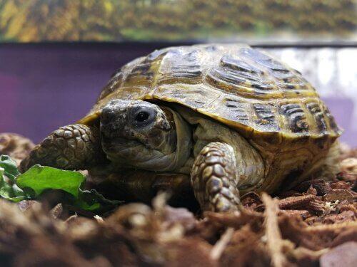 Baue dir dein eigenes Terrarium für Schildkröten