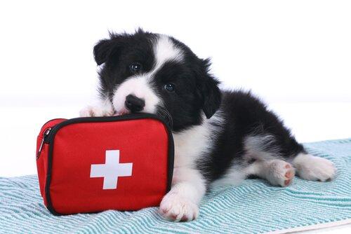 Die häufigsten Unfälle bei Haustieren