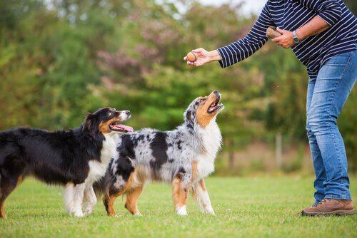 Viele Hunde spielen gerne Ball