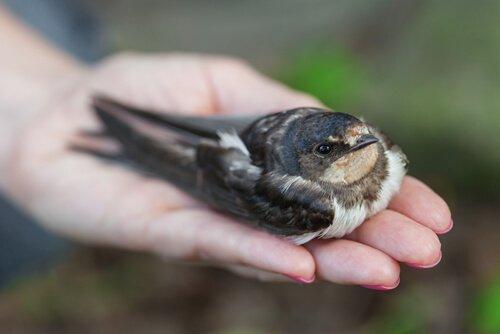 Vogelkrankheiten: woran erkennt man sie?