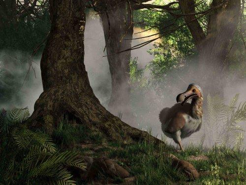 Warum ist der Dodo ausgestorben?