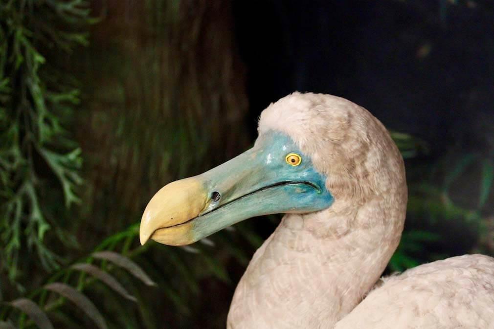 Was ist ein Dodo?