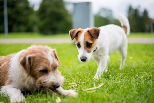 ein Hund nähert sich einem anderen Hund