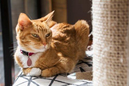 Warum mag meine Katze ihr Kratzbrett nicht?