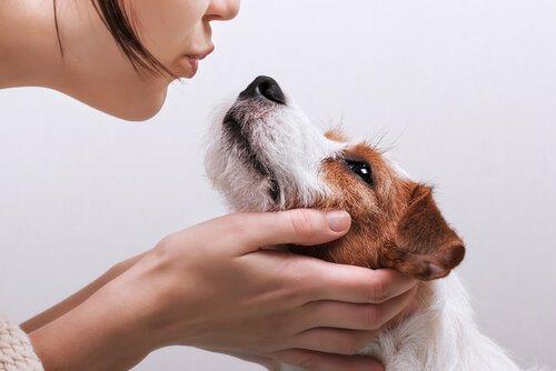 Campylobacter-Infektion, die durch Hunde übertragen wird