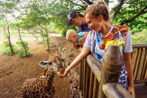 Zootiere: ist es schädlich, sie zu füttern?