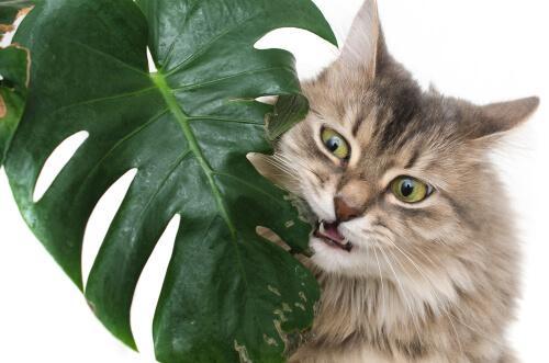 Welche sind die giftigsten Pflanzen für Tiere?