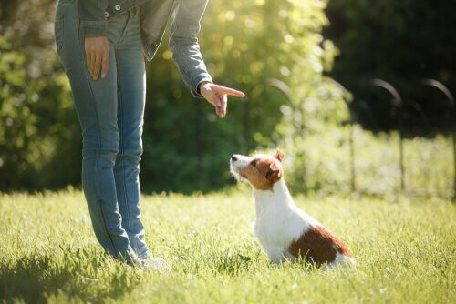 Warum ist die Erziehung von Hunden wichtig?
