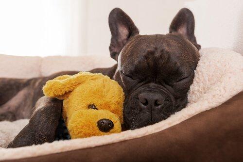 Ethologie für Hunde: ein Termin für deine Fellnase