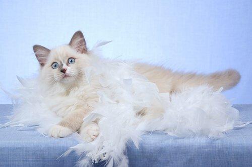 Fellwechsel bei Katzen: 5 Dinge, die du wissen solltest