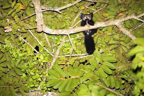 Fingertier auf einem Baum