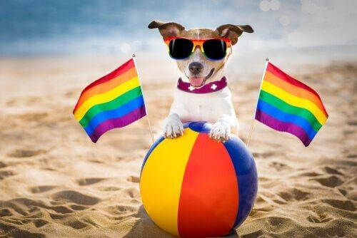 Gibt es homosexuelle Hunde? Alles Wissenswerte!