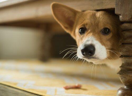 Hund hat Angst vor Lärm