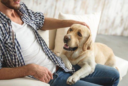 Hund und Mensch auf dem Sofa