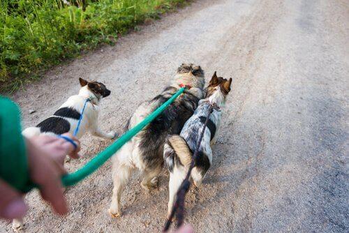 6 Tipps für Hunde-Spazierführer