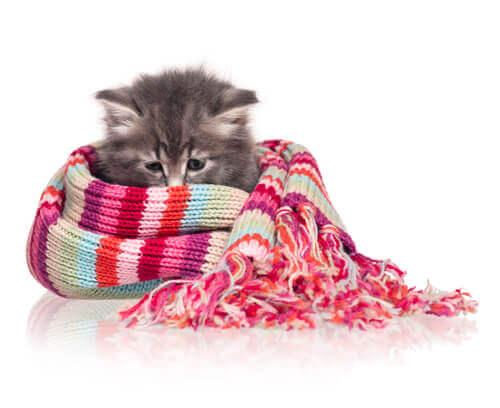 Kätzchen im Wollschal