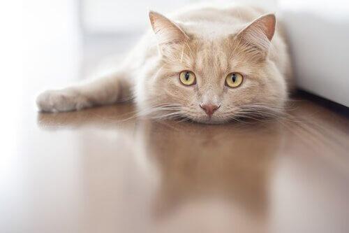 Katze liegt auf der Lauer
