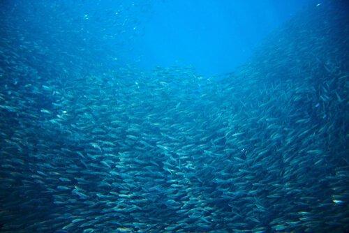 Massenmigrationen bei Meerestieren