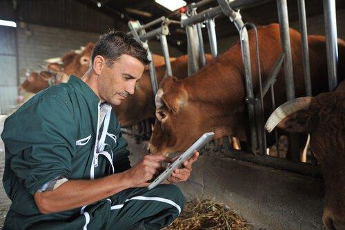 Mittel gegen Parasiten: Anwendung bei Vieh