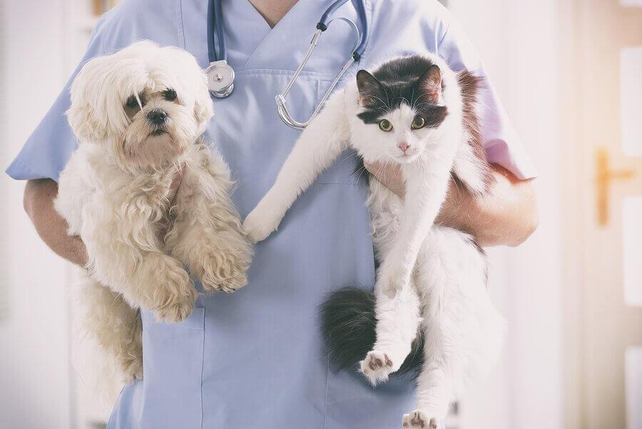 Rettung einer Katze oder eines Hundes: tierärztliche Untersuchung