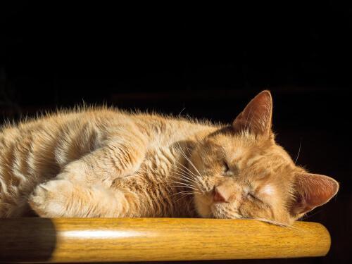Es gibt noch einiges über die Schlafphasen von Katzen zu entdecken.