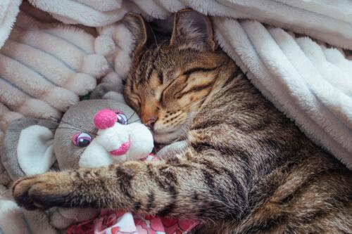 Interessantes über die Schlafphasen von Katzen