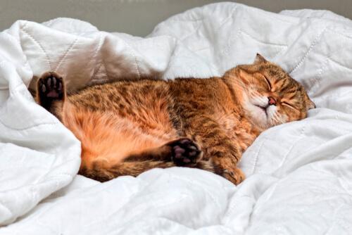 Die Schlafphasen von Katzen ähneln denen des Menschen.