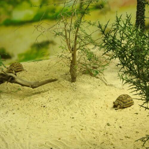 Schnupfen bei Schildkröten in einem überfüllten Terrarium.