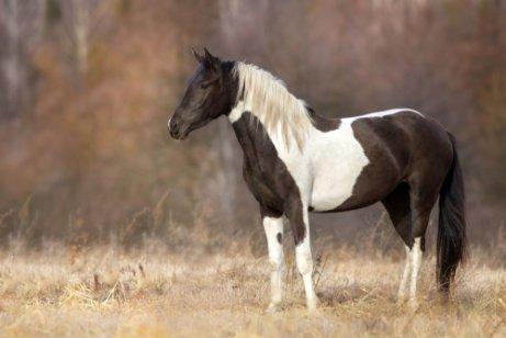 Stress beim Pferd vermeiden