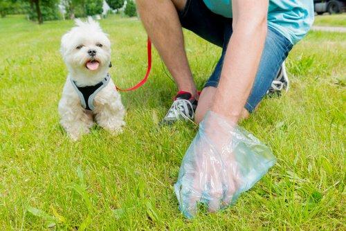 Stubenreinheit bei Hunden
