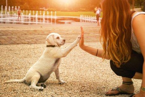 Taube Hunde und der sechste Sinn