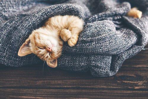 Wie wirken sich Temperaturveränderungen auf deine Katze aus?