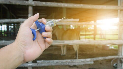Tierarzt mit Spritze