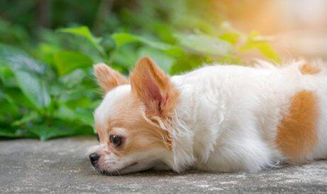 Verlorenes Haustier wiederfinden