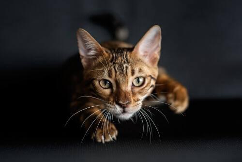 Wie Katzen das Jagen erlernen - ein spielerischer Vorgang