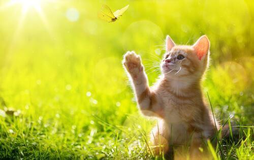 Wie Katzen das Jagen erlernen: im Spiel