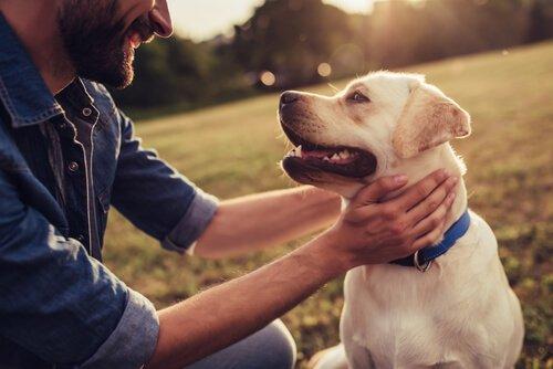 Zeit mit dem Hund verbringen
