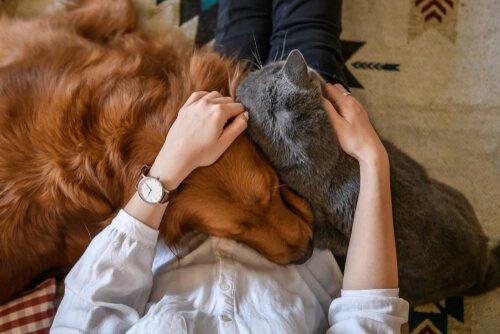 Zuneigung für dein Haustier: 4 Arten, ihm Liebe zu zeigen