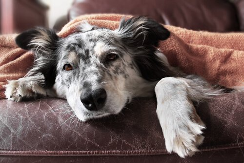 Würmer bei Hunden: Was kann ich tun?