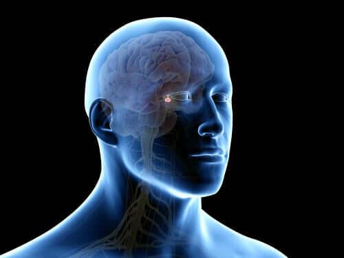Abbildung eines menschlichen Kopfes