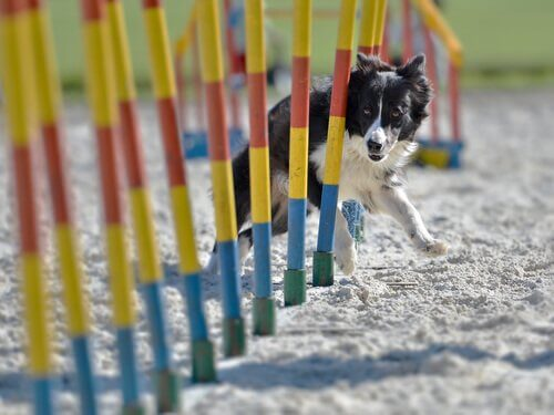 Agility wird immer beliebter