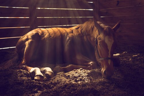 Arten von Koliken bei Pferden