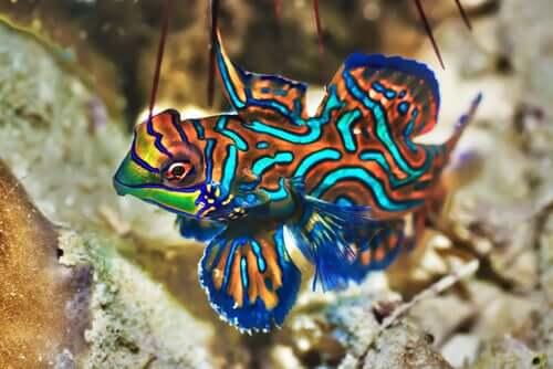 Bunte Fische für dein Aquarium
