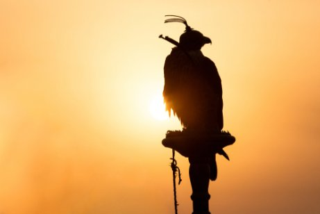 Der Falke bei der Beizjagd