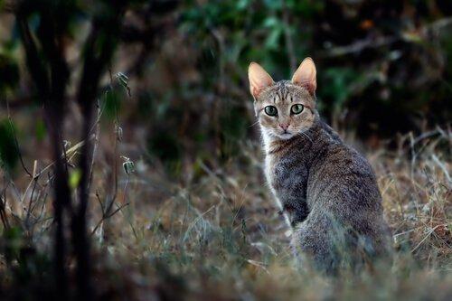 Die Katze im alten Ägypten: Bedeutung und Kuriositäten
