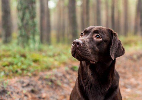 Die Lebensdauer eines Hundes hängt von seiner Farbe ab